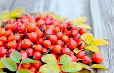 beauty benefits of rosehip oil plant oils liz earle wellbeing