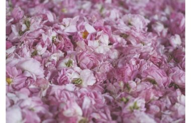 beauty benefits of rose water and oil for Liz Earle Wellbeing 2