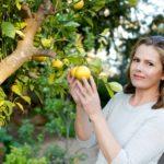 Liz Ealre Wellbeing Health Benefits and Beauty of Lemons