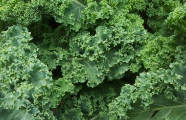Liz Earle Wellbeing health and beauty benefits of kale