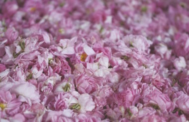 beauty-benefits-of-rose-water-and-oil-for-Liz-Earle-Wellbeing-new-new
