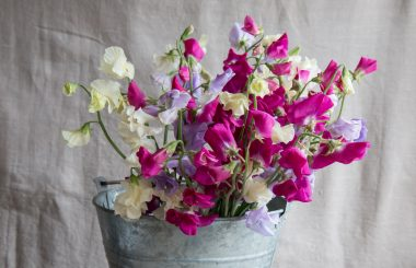how to grow sweet peas the real flower company liz earle wellbeing