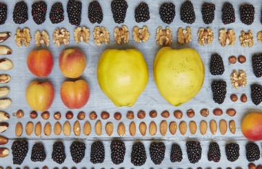 Discover our favourite fruits and nuts, which can be foraged during the autumn season in the UK, and a few tasty seasonal recipes. Photo by Georgia Glynn Smith