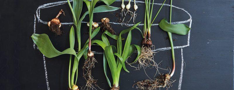 when to plant winter bulbs liz earle wellbeing header